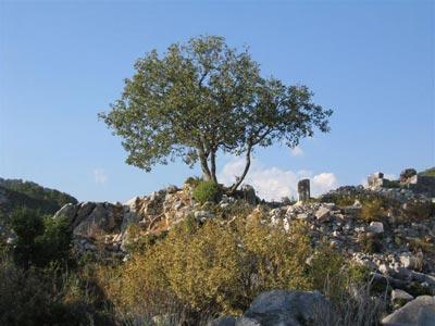 Древнее поселение Махмутлар